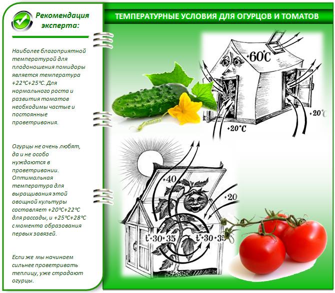 Агротехника и биологические особенности выращивания огурцов и помидор в одной теплице. https://vasha-teplitsa.ru.