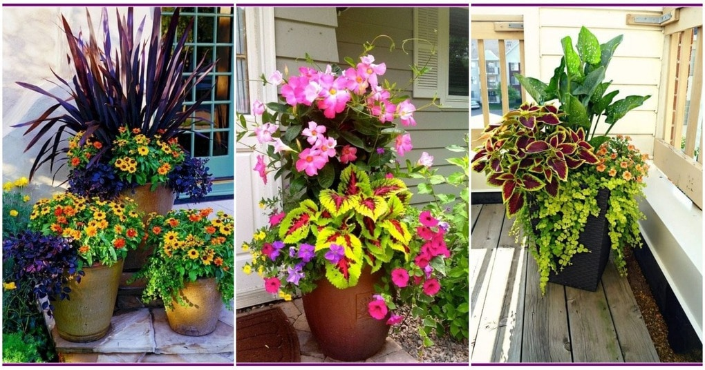 Восхитительные идеи цветочных композиций в вазонах для вашего участка