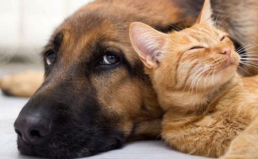 Число кошек исобак вквартире могут ограничить